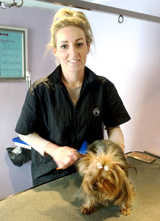 dog_grooming_online_course